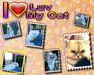 Personal Unique Gifts -- Photo Posters- I luv my cat -lainegennadesigns