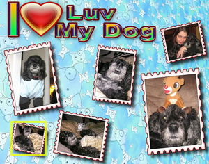 Personal Unique Gifts -- Photo Posters- I luv my dog -lainegennadesigns