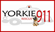 Yorkie 911 Rescue Group
